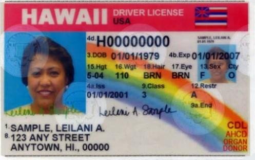 hawaii-drivers-license-sample-500x313