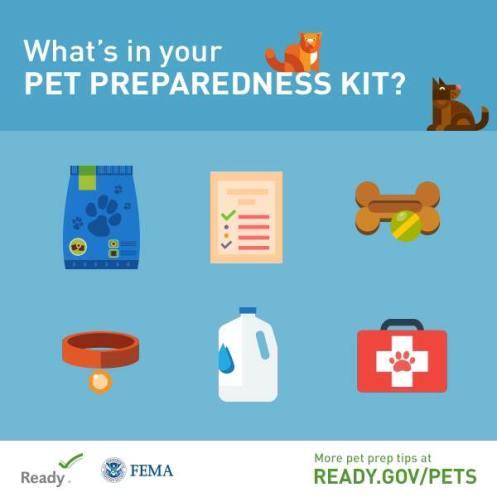 What S In A Pet Preparedness Kit Retiree News